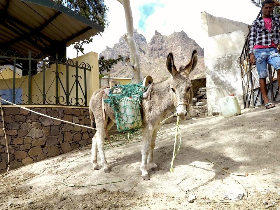 Donkey Cape Verde